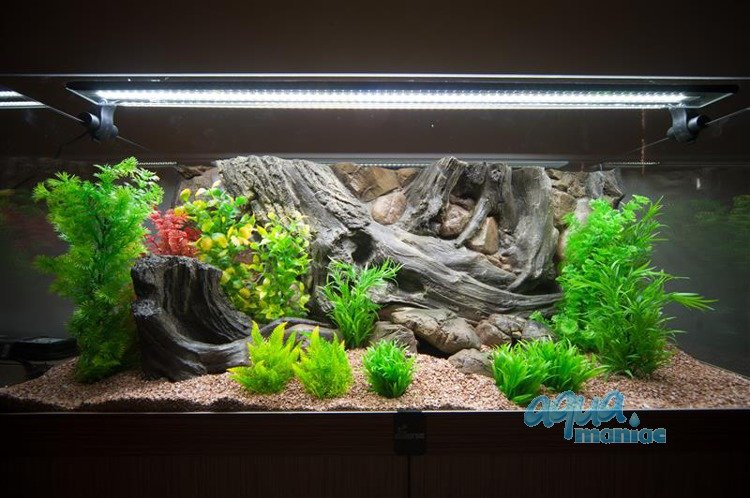 Aquarium stone for small fish tanks for Small fish tank