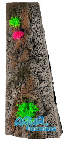 Start Module Limestone Background 20x40cm with corals
