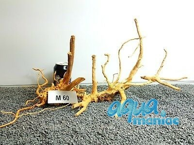 2x Red Moore Root