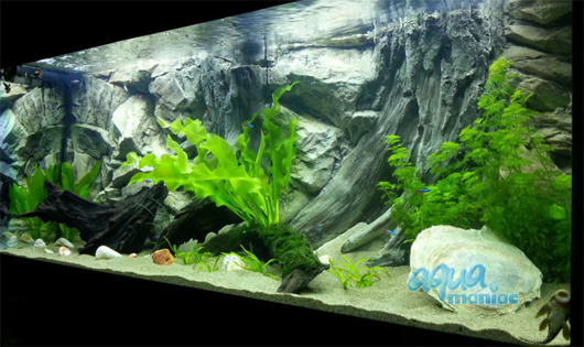 3D root background 146x54cm