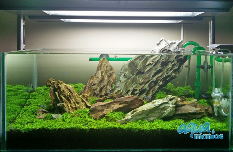 Dragon Stone for natural aqua scaping
