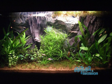Fluval Roma 125 root background 78x43cm 1 section