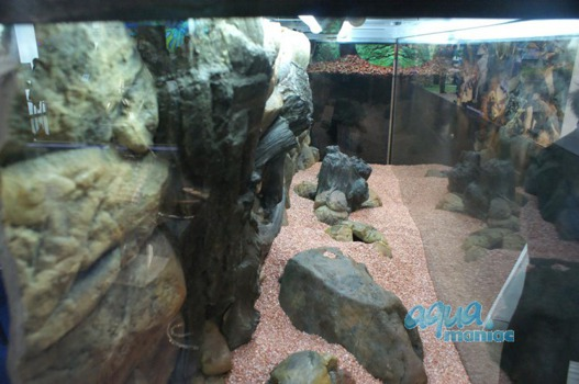 Grey long aquarium boulder empty inside