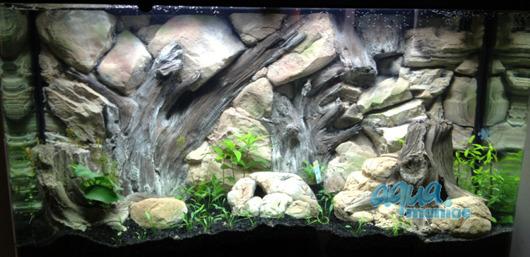 JUWEL RIO 125 root background 78x42cm
