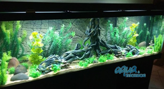 Fluval Roma 200 3D Root Background 97x45cm in 2 sections