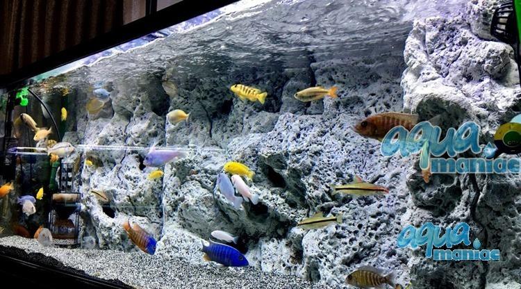 Modules of Limestone Background to fit 150X60cm aquarium