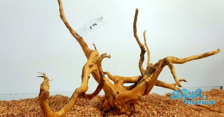 Red Moore Root size 42x22cm