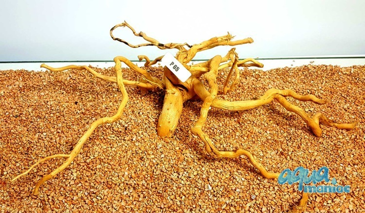 Red Moore Root size 50x15cm