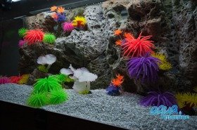 Modules of Limestone Background with corals to fit 180x50cm aquarium